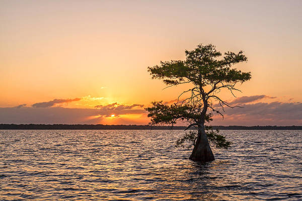 Bald Cypress Photograph - Blue Cypress Lake Sunrise by Claudia Domenig