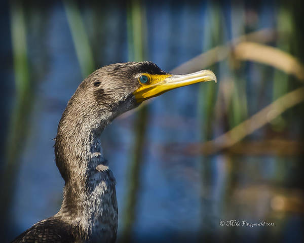 Photograph - Blue Eye by Mike Fitzgerald