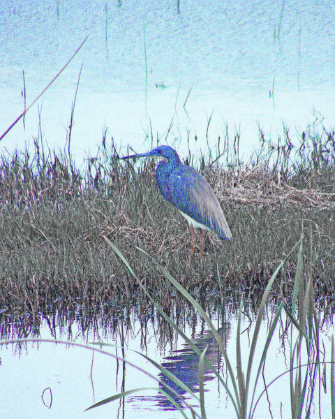 Digital Art - Blue Heron Sabine Nwr La by Lizi Beard-Ward