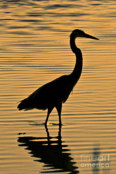 Mixed Media - Blue Heron Silhouette by Jerry L Barrett