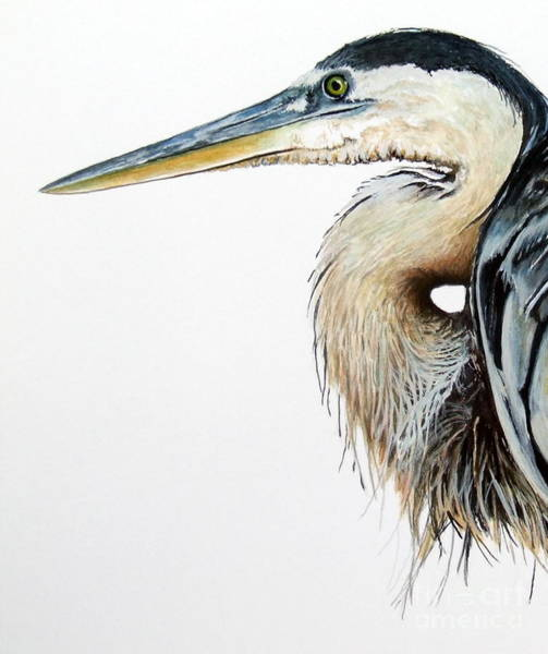 Painting - Blue Heron Study by Greg and Linda Halom