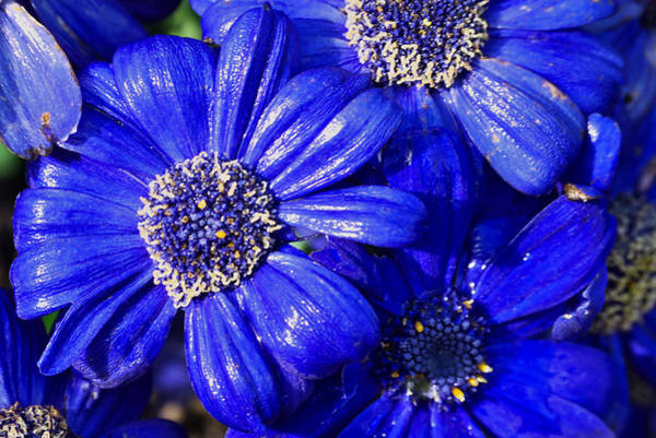 Photograph - Blue by Ivan Slosar