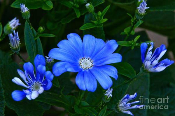 Photograph - Blue Magic by Byron Varvarigos
