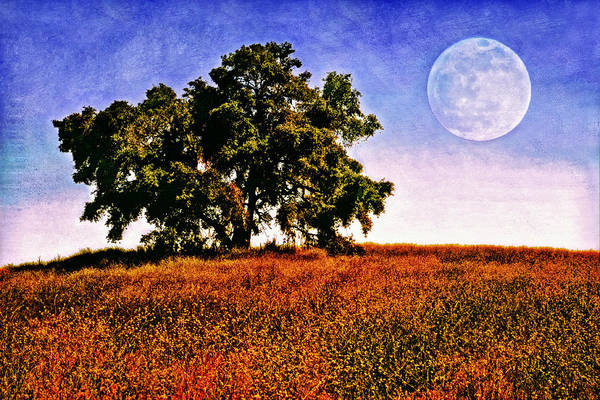 Blue Moon Morning Art Print by Donna Pagakis