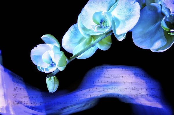 Photograph - Blue Note by Pamela Steege