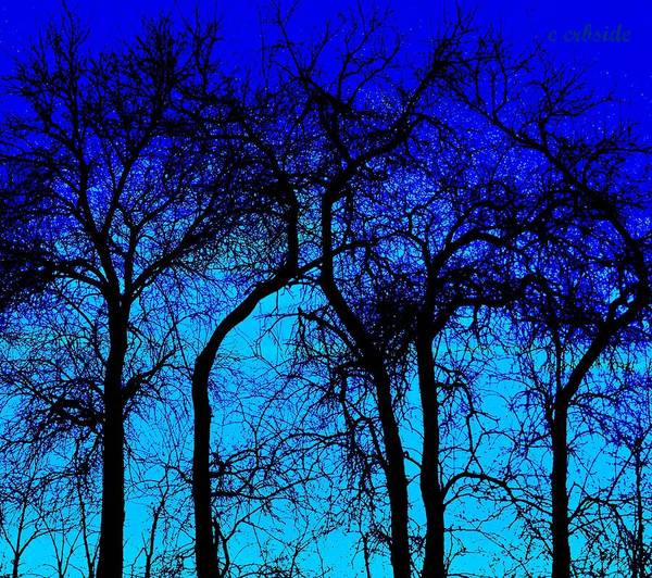 Treeline Photograph - Blue Sunset by Chris Berry