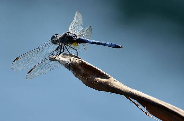 Dasher Photograph - Blue Tranquility by Fraida Gutovich