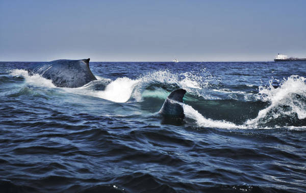 Wall Art - Photograph - Blue Whales by Mike Raabe