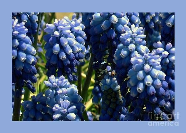 Digital Art - Bluebells by Dale   Ford