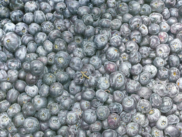 Drawing - Blueberries by Dominic White
