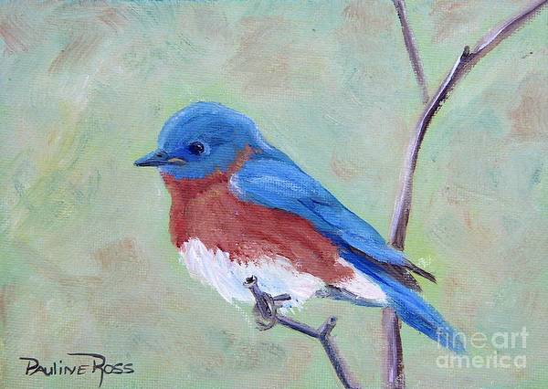 Wall Art - Painting - Bluebird On A Limb by Pauline Ross