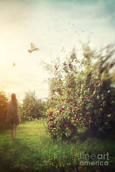 Photograph - Blured Figure Of Woman Walking In Apple Orchard by Sandra Cunningham