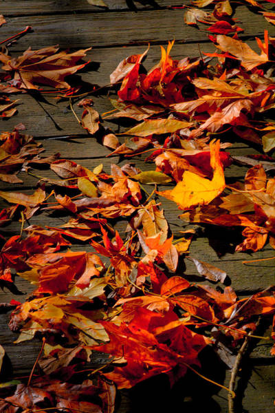 Photograph - Boardwalk Leaves by David Patterson
