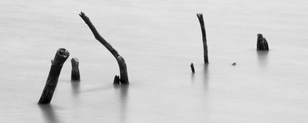 Photograph - Bones by Ryan Heffron
