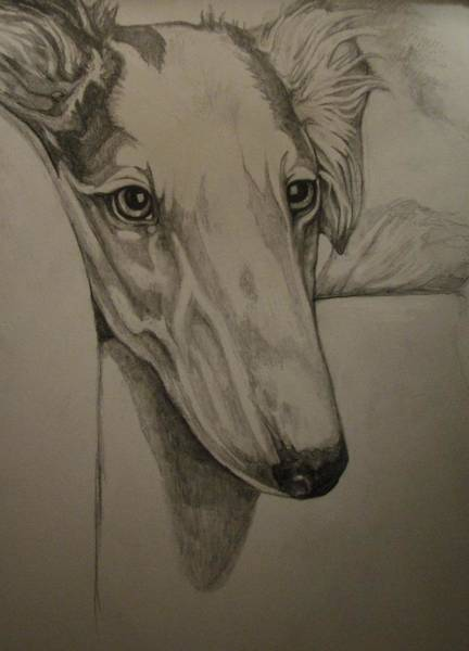 Russian Wolfhound Drawing - Borzoi by Deborah Fruehling