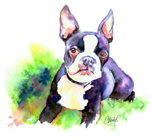 Painting - Boston Terrier Puppy by Christy Freeman Stark