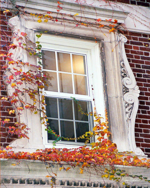 Photograph - Boston Window by Diana Haronis