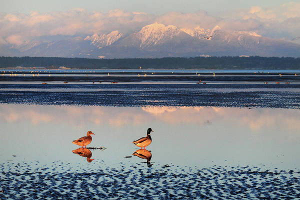 Photograph - Boundary Bay Landscape by Pierre Leclerc Photography