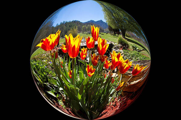 Eye Ball Photograph - Bouquet In A Bubble by Debra and Dave Vanderlaan