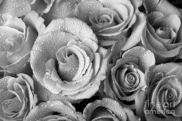Photograph - Bouquet Of Roses With Water Drops In Black And White by James BO Insogna