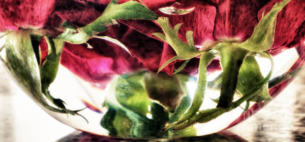 Rose Bowl Photograph - Bowl Of Roses by Stelios Kleanthous