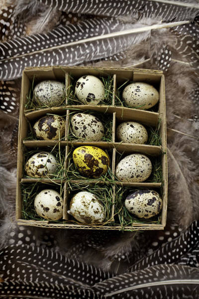 Birds Eggs Photograph - Box Of Quail Eggs by Garry Gay