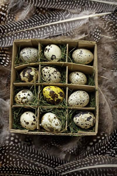 Birds Nest Photograph - Box Of Quail Eggs by Garry Gay