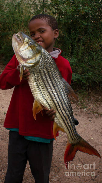 Photograph - Boy With Tigerfish by Mareko Marciniak