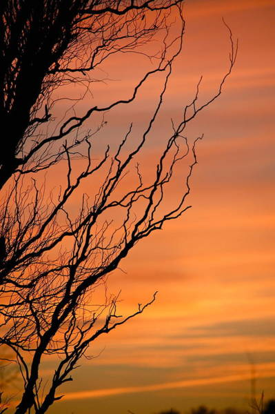 Branches Meandering Through The Sunset Art Print