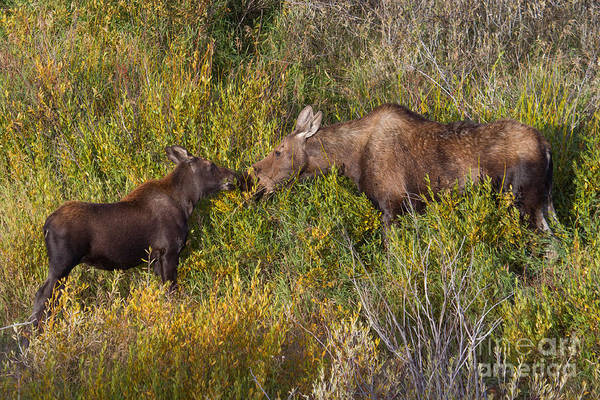 Photograph - Breakfast With Mama 12 by Katie LaSalle-Lowery