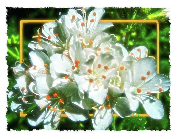 Digital Art - Bridesmaid Bouquet by Gary Baird