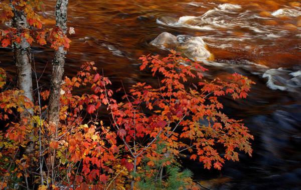 Photograph - Bright Leaves At Swift River by Nancy De Flon