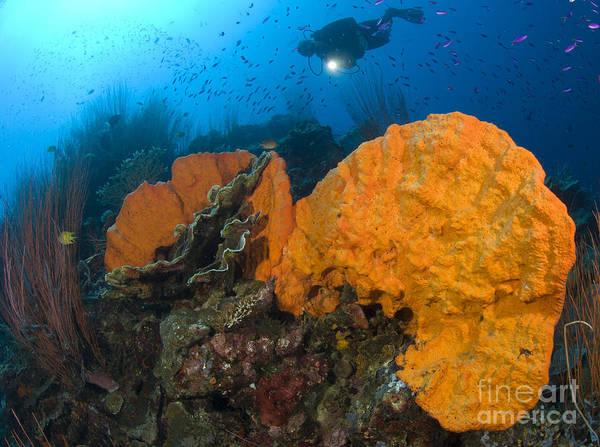 Photograph - Bright Orange Sponge With Diver by Steve Jones