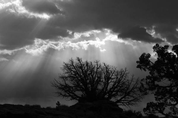 Photograph - Bright Rays by Wes and Dotty Weber