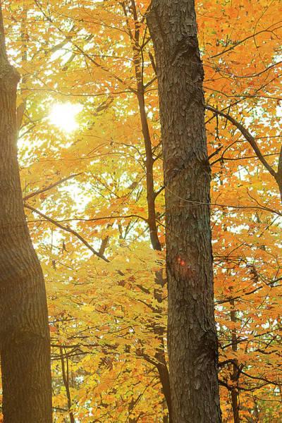 Photograph - Bright Yellow by Scott Hovind