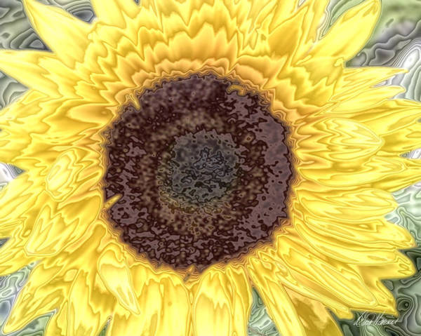 Photograph - Brilliant Sunflower by Diana Haronis