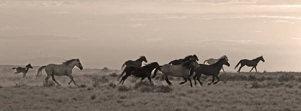 Mare And Foal Photograph - Bringing Up The Rear by Sandy Sisti