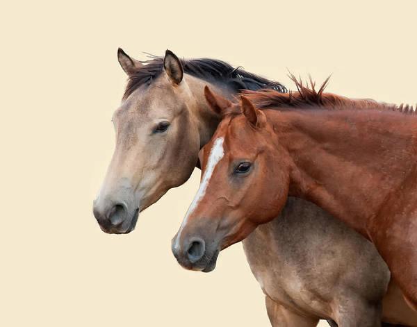 Ranch Digital Art - Broodmares by Dewain Maney