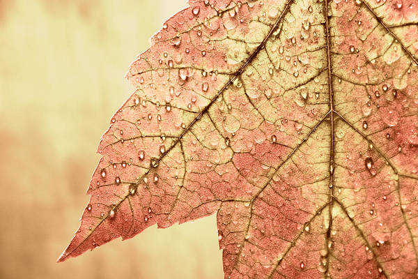 Change Wall Art - Photograph - Brown Autumn by Carol Leigh