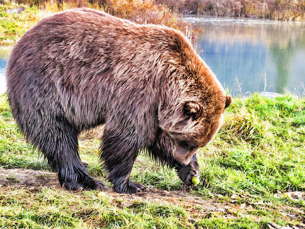 Painting - Brown Bear 201 by Dean Wittle
