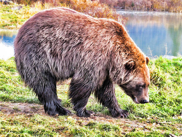 Painting - Brown Bear 202 by Dean Wittle