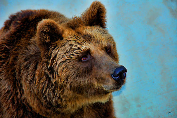 Painting - Brown Bear 203 by Dean Wittle
