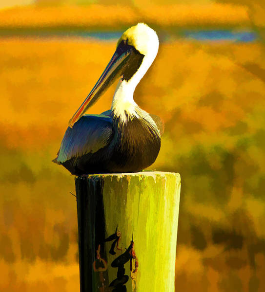 Photograph - Brown Pelican by Bill Barber