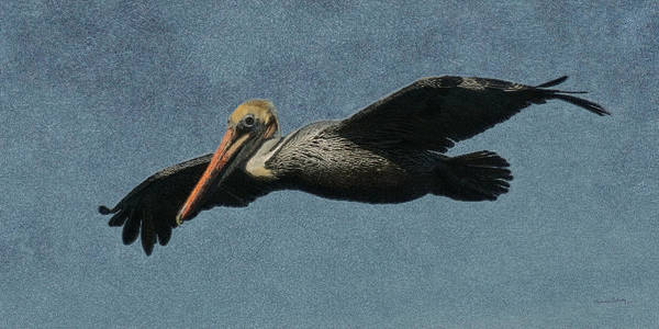 Shore Bird Digital Art - Brown Pelican Painterly by Ernie Echols