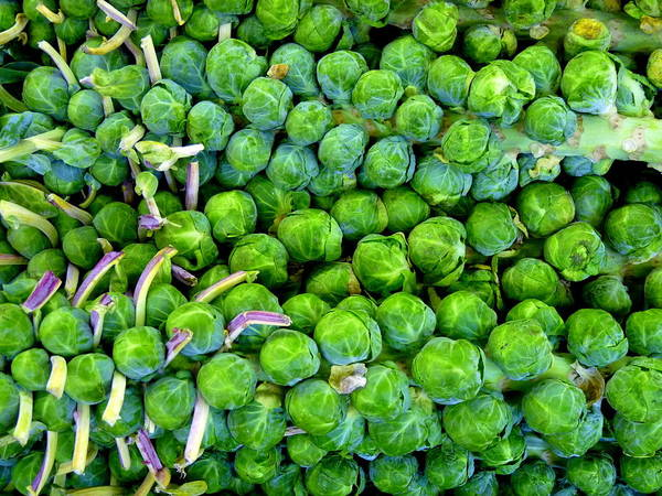 Photograph - Brussel Sprouts On Stalk by Jeff Lowe