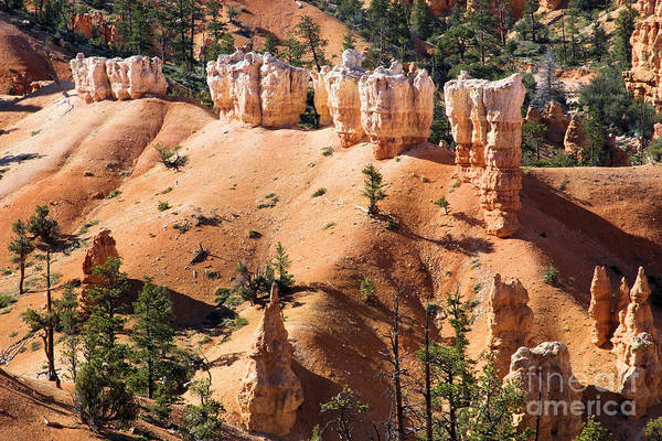 Photograph - Bryce Canyon Army by Adam Jewell