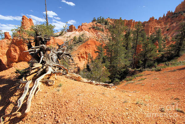 Photograph - Bryce Canyon Canyon by Adam Jewell