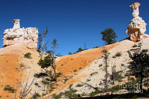 Photograph - Bryce Canyon Character by Adam Jewell