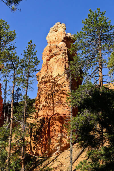Photograph - Bryce Canyon Hoodoo by Greg Norrell