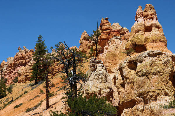Photograph - Bryce Canyon Santa Clause by Adam Jewell